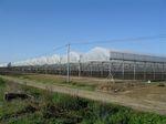 多尖顶温室 / 商业化种植 / 钢结构 / 带排水沟