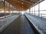 混凝土地垫 / 用于养牛场 / 防滑