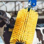 畜牧养殖刷子 / 固定式 / 奶牛 / 山羊