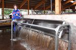 牛用饮水器 / 槽型 / 不锈钢 / 多入口