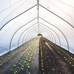 隧道式温室 / 商业化种植 / 塑料 / 临时