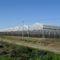 多尖顶温室 / 商业化种植 / 钢结构 / 带排水沟ASYBARRE Barre