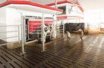 奶牛挤奶机器人 / 带清洁系统 / 蒸汽消毒