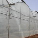 多尖顶温室 / 商业化种植 / 钢结构 / 永久性