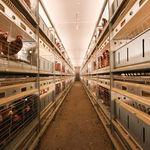 畜禽养殖系统 / 多层