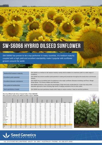 SW-s6066 hybrid oilseed sunflower