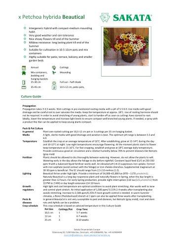 BEAUTICAL x Petchoa hybrida