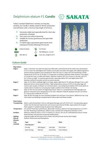 CANDLE Delphinium elatum F1