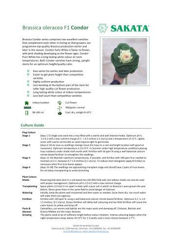 CONDOR Brassica oleracea F1